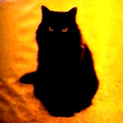 bengal cat for sale florida