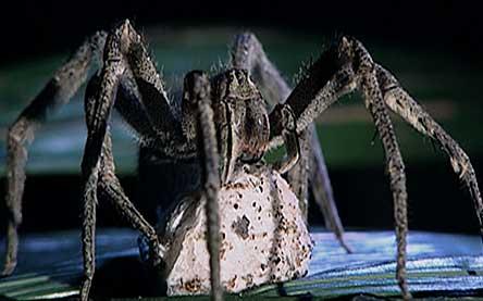http://www.thealmightyguru.com/Halloween/Monsters/Images/Spider4.jpg