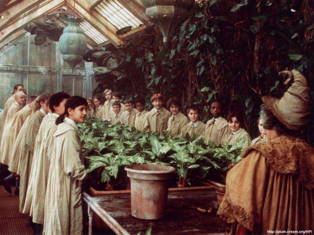 Clase de Herbología (Invernadero) Herbology2