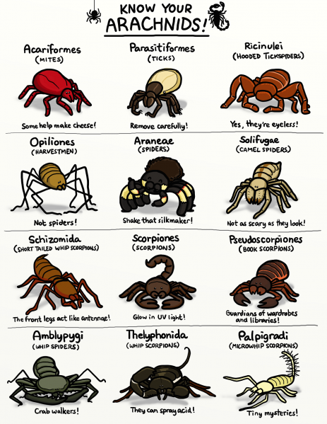 File:Ketrina Yim - Know Your Arachnids.png